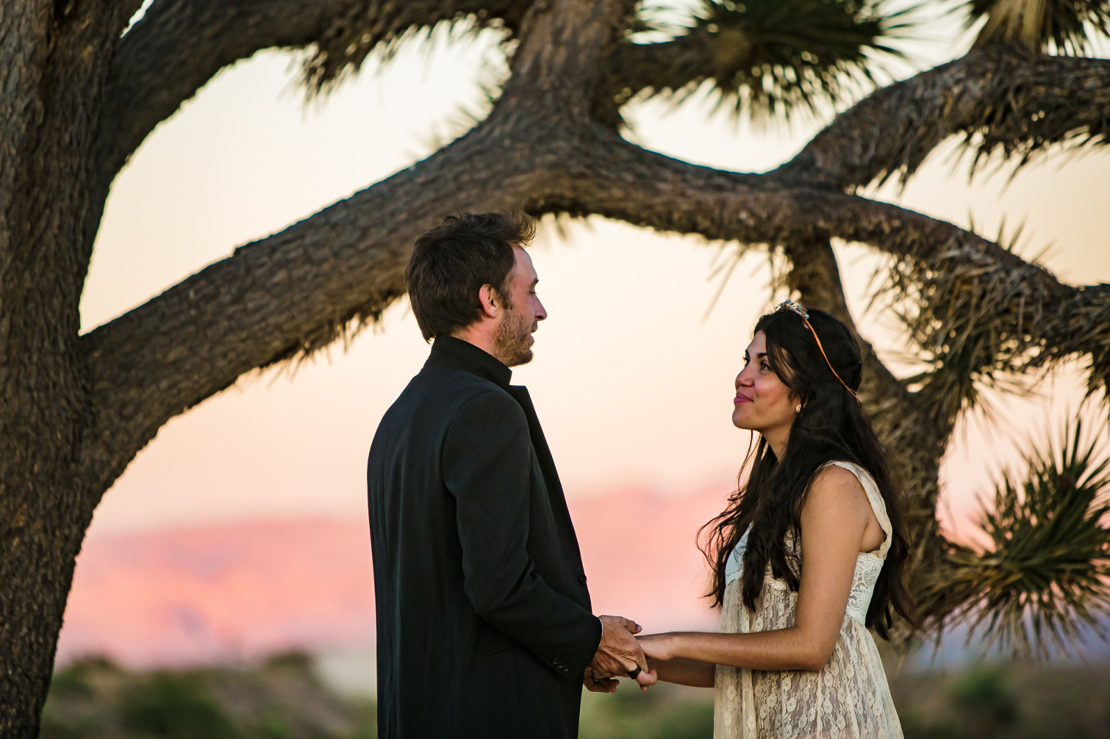 Couple gets married in front of a Joshua Tree at sunset.
